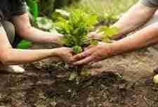 """""""A agricultura é vital para o equilíbrio e a saúde das pessoas"""""""