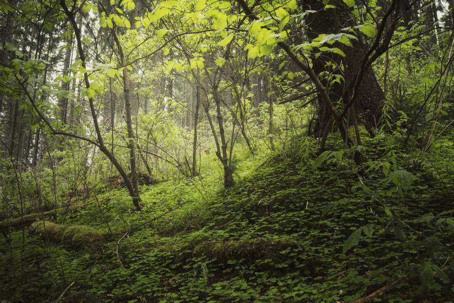 A Agenda da Sustentabilidade Ambiental do Banco do Brasil
